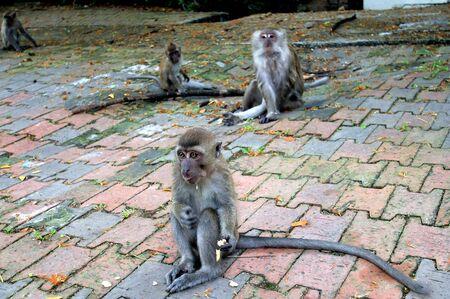 monkey Stock Photo - 57385076