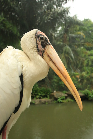 tropical bird in nature reserve