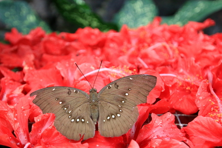 butterfly Stock Photo - 57497670