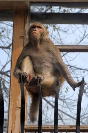 street monkey Stock Photo
