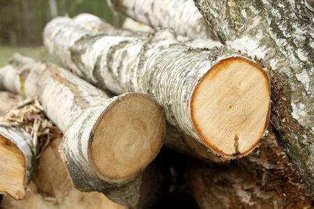 Logs of chopped birch wood