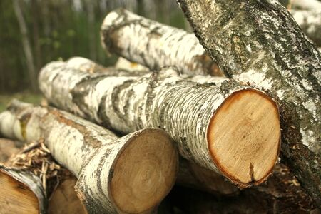 Piles of chopped birch wood Stock Photo