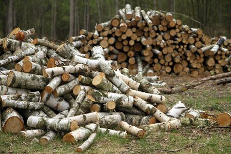 Piles of chopped wood