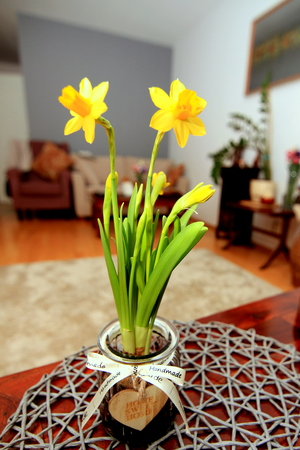 Pot flowers on table inside home Stock Photo