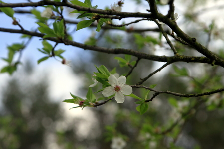 Early flowers on the tree