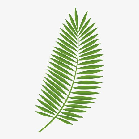 Vector graphics, green palm leaf.Graphics element.