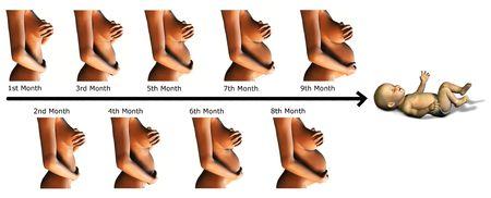 curare teneramente: Un'immagine che mostra le varie fasi di una gravidanza, 9 mesi e un bambino   alla fine.