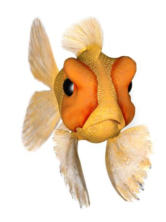 A cartoon goldfish looking very angry. photo