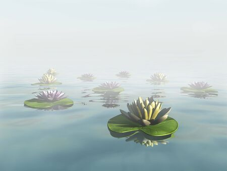 nymphaea: Water lilies in a dreamlike foggy lake.