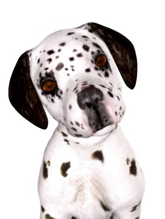 k9: A cute dalmatian puppy isolated on white.