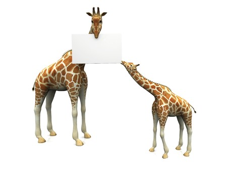 Baby and mother giraffe holding a blank sign in its mouths.