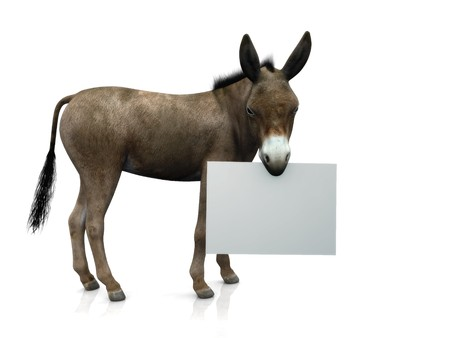mule: A donkey holding a blank sign in his mouth. Stock Photo