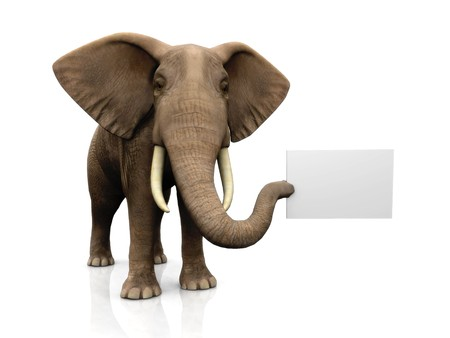 copyspace: A big elephant holding a blank sign in its trunk.