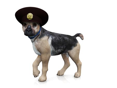 k9: A german shepherd dog with a police hat on his head.
