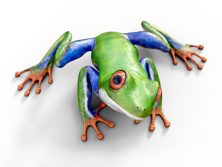 Realistic 3D rendering of a green, blue and orange colored red-eyed tree frog, Agalychnis callidryas, sitting on a white floor.
