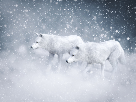 3D rendering of two majestic white wolfs surrounded by magical snow.