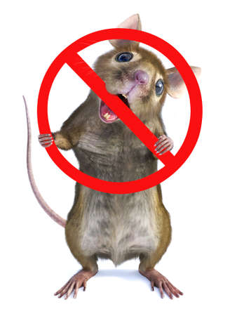 3D rendering of a cute mouse standing up on two legs and chewing on a big red prohibition sign that he's holding. Pest contol concept. White background.