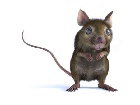 3D rendering of a cute mouse standing up on two legs and looking. White background. Stock Photo
