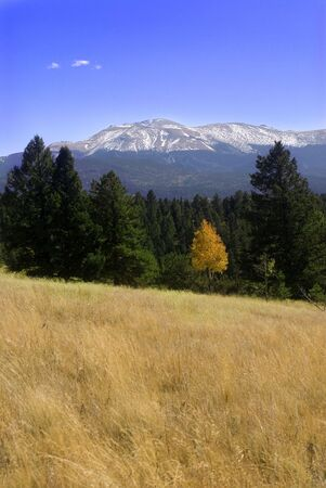 Colored photograph of the Rocky Mountains with evergreen trees and aspen in front of them. There is also a big field. Photo taken with Sony Alpha 100. Stock Photo - 5651252