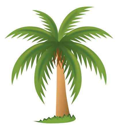 Vector palm tree Vector