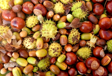 detritus: Colourful fall detritus of horse chestnuts, acorns, beechnuts and cobnuts as a natural