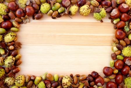 detritus: Fall detritus of beechnuts, horse chestnuts and acorns form a rectangular frame on a wooden