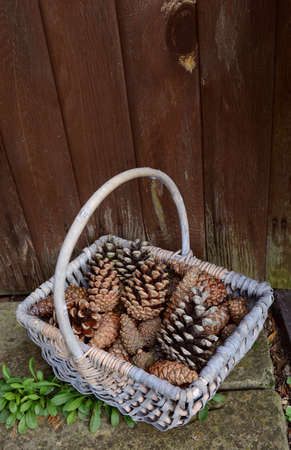 varying: Fir cones of varying sizes in a woven basket by a wooden door