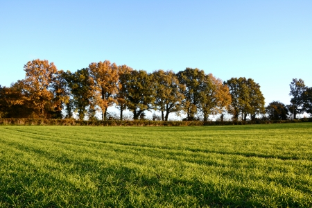 hedgerow: Autumnal trees edge a farm field in Kent, England