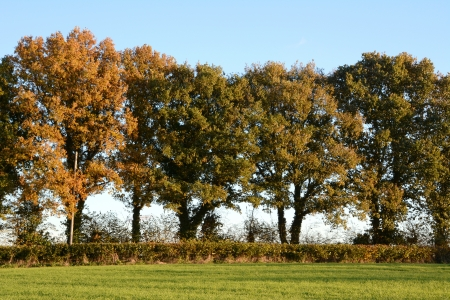 hedgerow: Trees turning to fall colours at the edge of a lush farm field