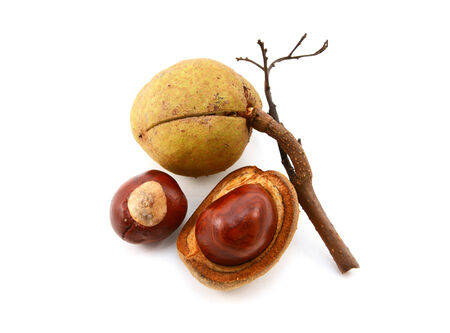 buckeye seed: Smooth seed cases and conkers from a red horse chestnut tree, isolated on a white background Stock Photo