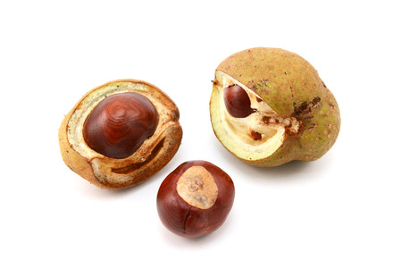 buckeye seed: Conker and opened seed cases from a red horse chestnut tree, isolated on a white background