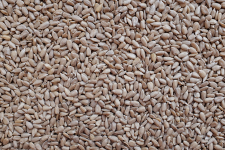hulled: Hulled sunflower seed hearts as an abstract background texture Stock Photo