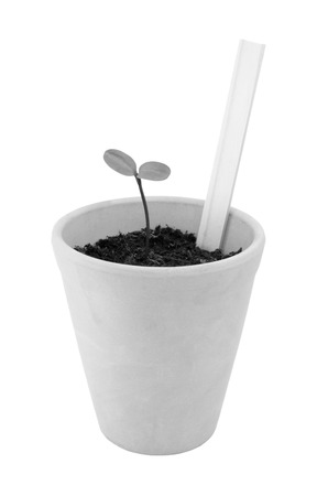 Seedling grows in a terracotta flowerpot with a blank plant label ready for your own title, isolated on a white background - monochrome processing photo
