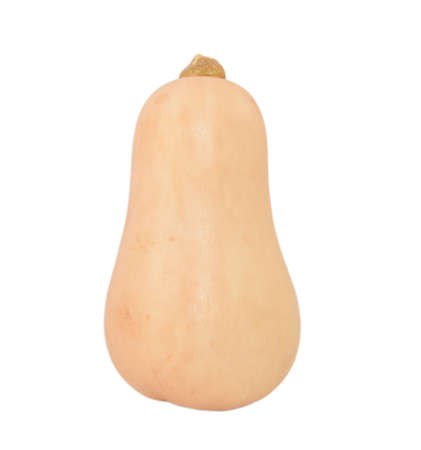 cucurbit: Fresh butternut squash, isolated on a white background Stock Photo