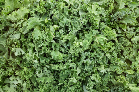 cruciferous: Chopped kale leaves as an abstract background texture