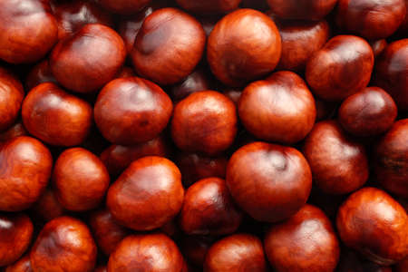 horse chestnut': Rich brown autumn conkers from a horse chestnut tree as an abstract background texture Stock Photo