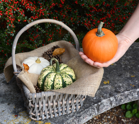 gourds: Woman holds small pumpkin in her hand next to a basket of fall gourds on a stone bench Stock Photo