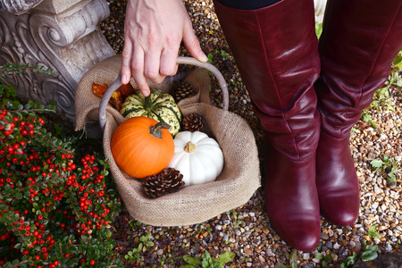hessian boots: Woman in dark red boots picks up a small rustic basket of autumn gourds