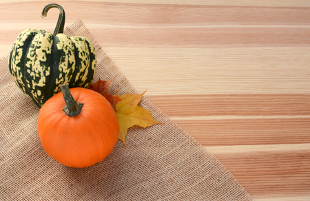 harlequin: Harlequin and small orange pumpkin with maple leaves on a pine wood background, with copy space
