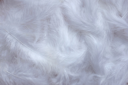 feathering: Soft white marabou feathers as an abstract background texture