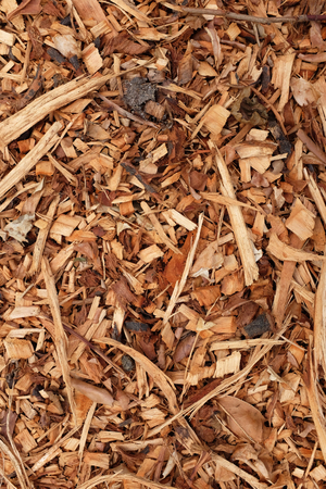 bark mulch: Bark, leaves and wood chippings mulch as an abstract coarse background texture