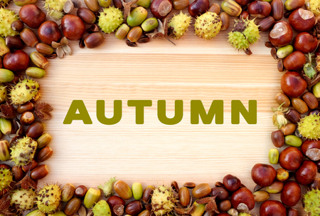 horse chestnuts: AUTUMN written on wooden background with beechnuts, horse chestnuts and acorns frame