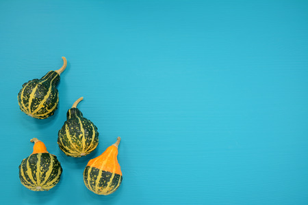 bumpy: Four green and yellow bumpy ornamental gourds on a bright blue painted wooden background with copy space