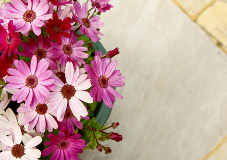 osteospermum: Flowerpot full of pink and magenta African daisies with copy space over stone patio slabs