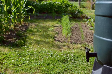 緑雨バレル、農園に対してセレクティブ フォーカスで黒のタップ。野菜工場は床で育ちます。雨水は、庭に水を環境に優しい方法です。