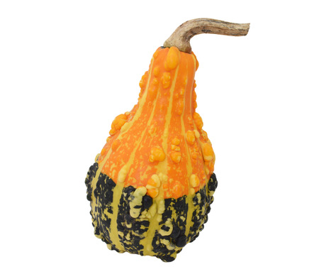Pear-shaped orange and green ornamental gourd with large warty lumps and bold stripes, isolated on a white background