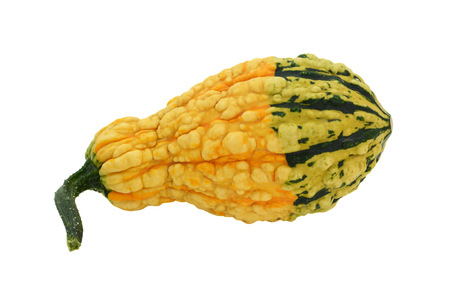 Yellow warty ornamental gourd with a green base, isolated on a white background