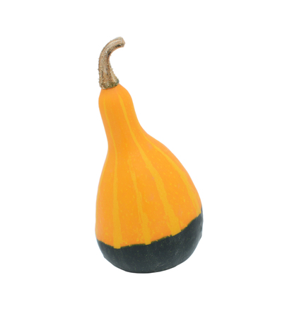 Smooth-skinned, pear-shaped orange and green ornamental gourd, isolated on a white background
