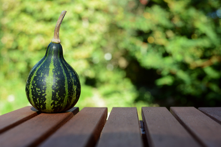 Green dancing ornamental gourd on a wooden table outside in a lush garden, with copy space