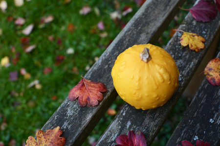 Warty round yellow ornamental gourd on a rustic wooden bench in a fall garden, with copy space